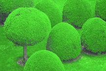 green rocks*