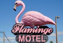 Flamingo / by Dior Acuzar
