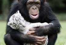 Animals and relaxation / Parce que regarder des animaux ça détend