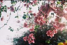 Flowers Gardens etc