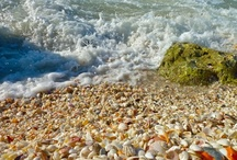 Ft. Myers/Sanibel/Captiva Beaches / Some of the Sunshine State's most beautiful beaches can be found in the Fort Myers area. World class shelling on Sanibel & Captiva! / by Must Do Visitor Guides - Southwest Florida