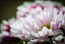 Lente | Spring | Tavasz / #byELKmedia http://bit.ly/1bVG8H1