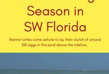 Things to do in Florida / Just some of the many fun, exciting, romantic, or adventurous things to do on vacation in Southwest Florida. Discover all there is to do in Sarasota, Siesta Key, Fort Myers Beach, Sanibel, Captiva, Naples, and Marco Island! MustDo.com #Florida #VacationPlanning #TravelTips #BeachVacation #MustDoFL