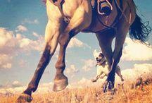Horse..life