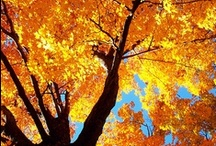 Autumns Splendor  / by Rachel Hope