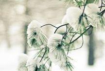 frosty kingdom  / by Rachel Hope