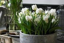 Bulbs / Creative ways of growing bulbs for indoor use. For more floral inspiration and flower arranging tips - visit my blog Of Spring and Summer: http://ofspringandsummer.blogspot.co.uk/
