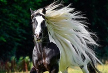Horses / by Marilyn Davis