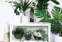 Indoor Potted Plants / Indoor potted plants to put some lush green colour into your home! Featuring lots of different trends. You'll find cacti, succulents, ferns and air plants - as well as many other inspirational indoor potted plant ideas.