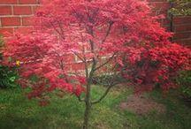 Dans mon Jardin / Le jardin c'est ma passion. J'aime les fleurs mais aussi les arbres en particulier les Érables japonais et les Magnolias. Au Printemps, vous pouvez me trouver les mains dans la terre à nettoyer mon Potager ou bien en train de bichoner mes fleurs et tondre ma pelouse . J'aime aussi la déco dans le jardin, alors je chine et je disperse quelques trouvailles sur la terrasse ou au pied des arbustes.
