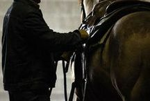 Horses: Riding, Training, Trail Riding / Having fun with your horse!