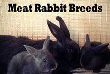 Rabbits / How to raise rabbits. How to keep rabbits healthy. Meat rabbits. Backyard rabbits.
