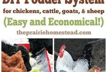 Fodder Systems / What is a fodder system, how to create a fodder system, all about fodder