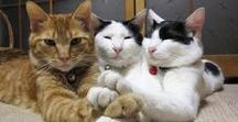 Pisicuţe / Pisici (Cats)