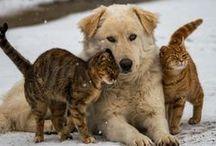 Prietenie între animale