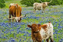 Texas, My Texas / by Kate Thompson