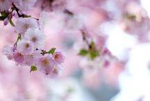 season / spring