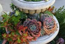 Gardening & Landscaping / by Erica