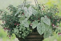 Contain Yourself! / Plant combinations for containers