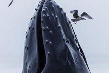 Ocean / 海 海原 哺乳類 #㍿人間設計