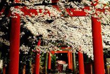 風流 Japan / 厳か、神秘的な日本 #㍿人間設計