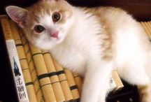 Hime Cat / my kitty 猫 Cat