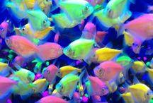 Beautiful Color Fish / 金魚 綺麗な色