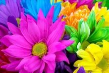 Color Splash! I love color!!