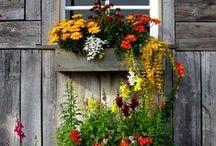 Gardening / by Elaine Hutcherson Gleaton