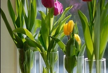 INside gardening
