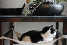 ~*Pet Stuff*~ / by Cassie Blondell