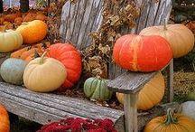Autumn / by Elaine Hutcherson Gleaton