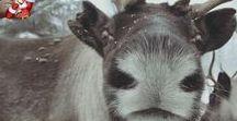 RegionLappland / Herzlich Willkommen in Lappland. Informationen über die Region Lappland allgemein und speziell Arvidsjaur,Malå, Arjeplog in Schwedisch Lappland. Informationen zur Region Lappland, Flugreisen von 4 Deutschen Flughäfen mit dem Direktflug der FlyCar nach Arvidsjaur- Schweden und von 2 Deutschen Flughäfen nach Kittilä- Finnland in 2-3Stunden Flugzeit und zurück, Tipps und Neuigkeiten, Überregionale Informationen zum Thema Lappland. www.fly-car.de Viel Spass Euer Johann