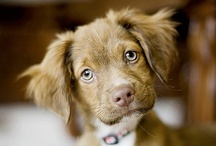 Puppy Love ♥ / Find adorable puppy pictures that will make you smile ( :