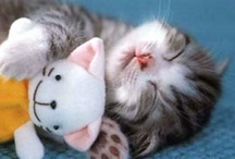 Sleepy Pets / Cutest pics of sleepy pet from Pinterest and beyond!
