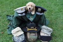 Salute to Service Pets / A solute to the pets who assist, guard, search, protect and simply snuggle.