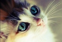 Popular Cat Breeds / Beautiful cat photos from Pinterest and beyond! Cat Lovers, Unite!
