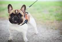 Pet Training Tips  / The latest and greatest from cat and dog training experts. / by PetCareRx