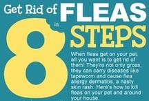 Pet Infographics / Free Infographics for pet parents