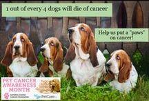Pet Cancer Awareness