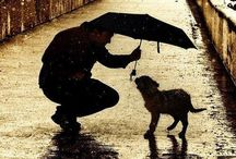"""Man's Best Friend / """"Dogs have given us their absolute all. We are the center of their universe. We are the focus of their love and faith and trust. They serve us in return for scraps. It is without a doubt the best deal man has ever made."""" – Roger A. Caras / by Ruben Cardenas"""