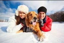 Winter Pet Health and Safety Tips / The holidays are right around the corner! Discover the best tips and tricks to keep your pet happy and healthy!