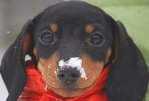 Snow Adventures / Cute pets playing in the snow!