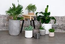 HOME: Plants / by Madison | Rad Maker