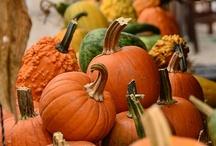 Pumpkins! / by Jennifer Giacobbe-Sutherland