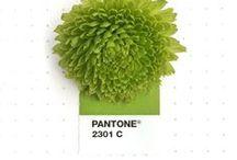 Packaging - Vert