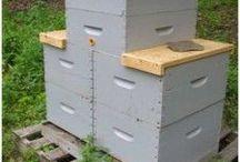 Apicultura / Idei bune si informatii pentru cresterea albinelor.