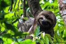 Costa Rica Travel Highlights - Backpacking in Mittelamerika / In Costa Rica gibt es eindrucksvolle qualmende Vulkane, traumhafte Strände, Faultiere die in den Bäumen hängen, bunte Tukane und andere exotische Tiere.