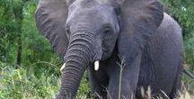 Südafrika Travel Highlights - Backpacking / Südafrika bietet traumhafte Strände, tolle Städte wie Kapstadt und die Möglichkeit Tiere wie Löwen und Elefanten in freier Wildbahn zu erleben...