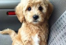 Too Stinkin' Cute! / by Susan Hillard